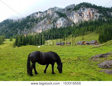 Black Horse on the  mountain pastureland near to the wooden countryhouses