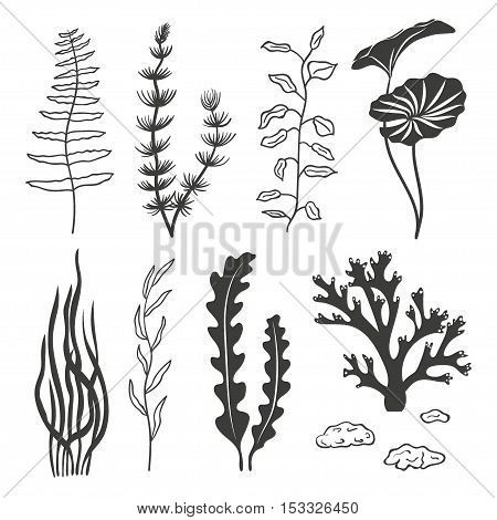 Set of seaweeds corals and stones isolated on white background. Underwater silhouettes algae set. Aquarium plants collection. Vector marine life.