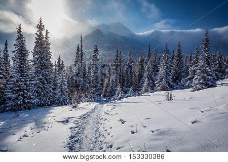 Enjoy Your Winter Journey To Tatras Mountains In Poland