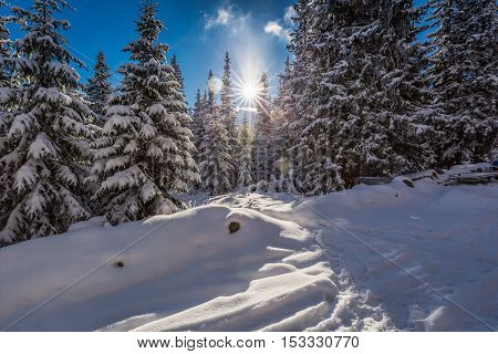Winter Mountain Trail In The Woods At Sunrise, Poland