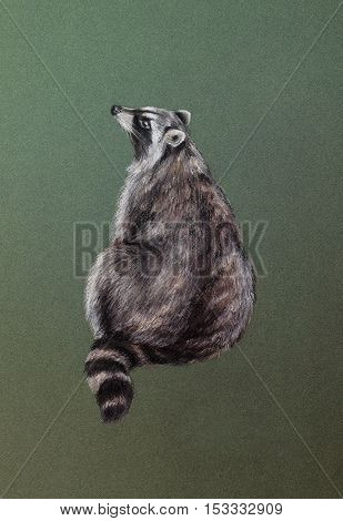 wild raccoon on green - pastel drawn animal with detailed paper texture