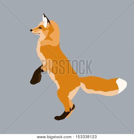 red fox vector illustration style Flat profile