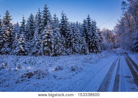 Frozen Forest With Snowy Road At Dawn In Winter