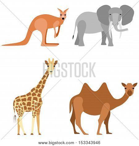 Set of animals: elephant camel giraffe kangaroo, vector illustration