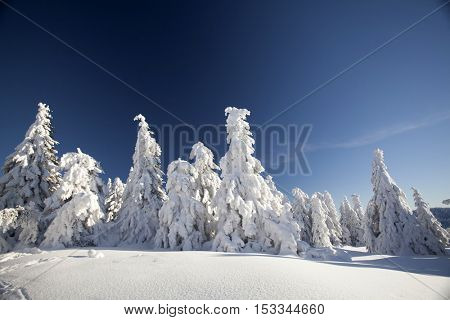 Beautiful winter landscape with snow covered trees and blue sky - Holiday and Christmas background