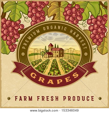 Vintage colorful grapes harvest label. Editable vector illustration in retro woodcut style with clipping mask.