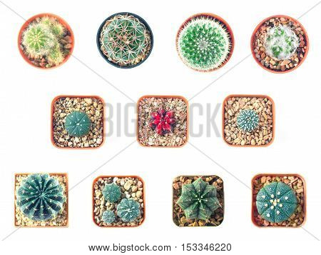Cactus top view collection isolate on white background