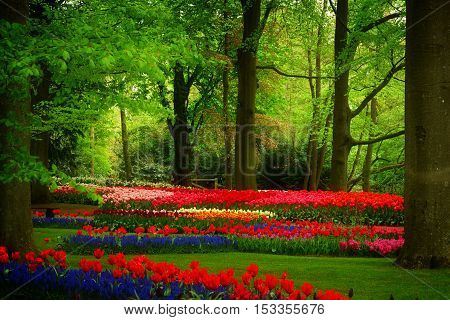 Colorful trees with green grass and spring flowers in holland park Keukenhof, Netherlands, retro toned