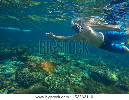 Snorkeling with sea turtle. Sea turtle in blue water over coral reef Philippines Apo island. Olive ridley turtle in sea. Sea turtle picture with man swimming underwater. Snorkeling with sea animal