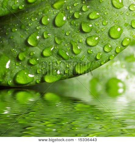 Green leaf with waredrops reflected in th water