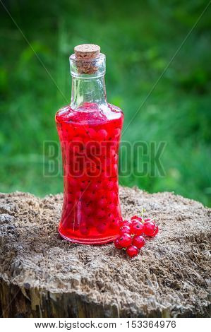 Sweet Liqueur Made Of Redcurrants And Alcohol