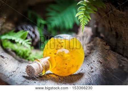 Sweet liqueur with honey and linden on old bark
