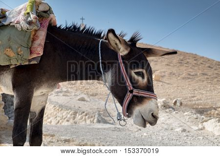 Donkey For Tourist Riding Tourists At St George Orthodox Monastery, Located In Wadi Qelt, Israel