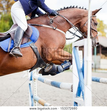 Young rider girl on horse jumping over obstacle on her course in competition. Close up image of show jumping