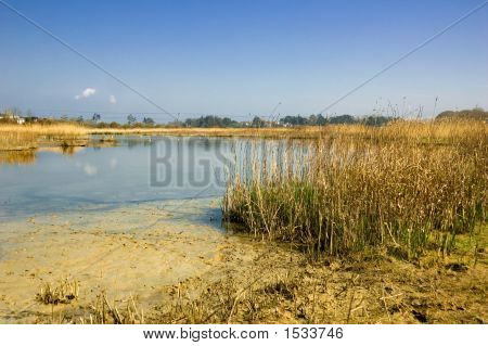Peaceful River Estuary
