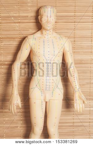 Medical acupuncture model of human on wooden background
