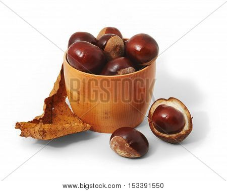 Nuts of hourse chestnuts in the cup on white background