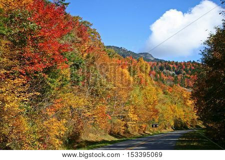 spectacular autumn foliage along the Blue Ridge Parkway in North Carolina