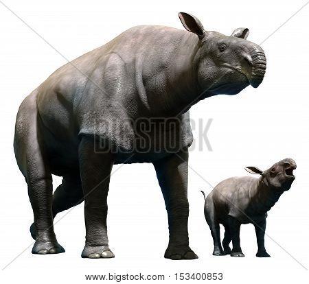 Paraceratherium with calf from the Oligocene era 3D illustration