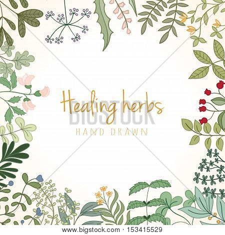 Hand drawn vintage background of medicinal organic healing herbs. Vector medical plants and herbal botanical flowerelements can be used for banner template, card, flyer, banner, sale, website