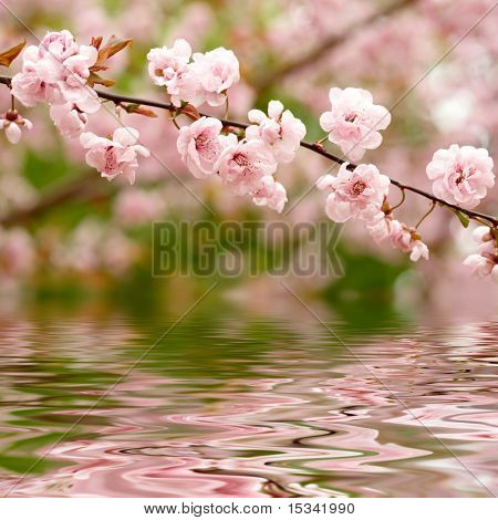 Flores de primavera reflejan en el agua