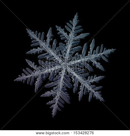 Snowflake isolated on black background: macro photo of real snow crystal, captured on glass surface. This is large fernlike dendrite snowflake with high detailed arms and very complex structure.