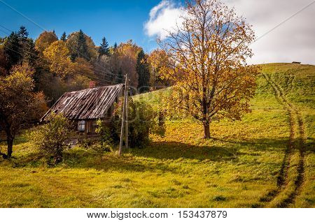 Old bandoned house under the tree - village landscape