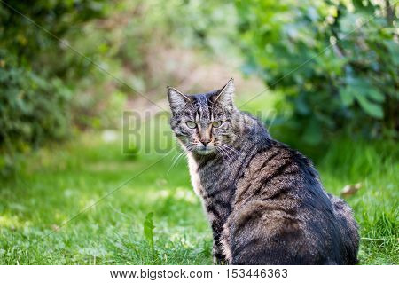 A tabby cat surrounded by green looking into the camera