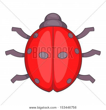 Ladybug icon. Cartoon illustration of ladybug vector icon for web