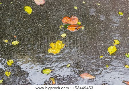 Background of asphalt coated with water and wet fallen leaves during rain