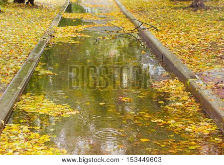 Park track with puddles and autumn fallen leaves in it during rain