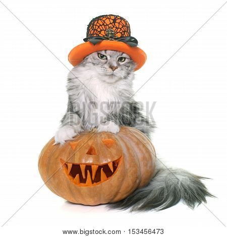 halloween pumpkin and cat in front of white background