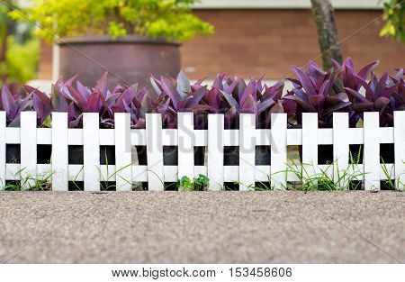 White picket fence along a sidewalk with tree