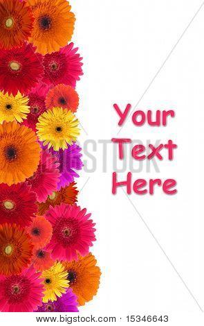 Daisy flower background
