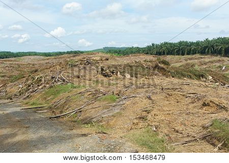 Land clearing for palm oil replantation in Sabah Malaysian Borneo.