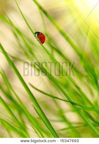 Ladybug on green grass. Shallow DOF poster