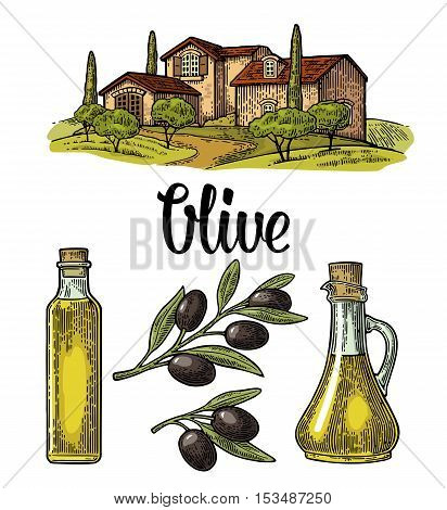 Set olive. Bottle and Jug glass of liquid with cork stopper and branch with leaves. Rural landscape with villa or farm with field tree and cypress. Vector vintage color engraving on white background