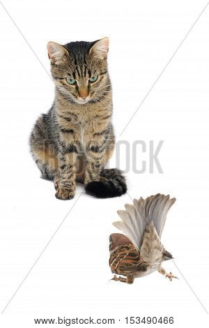 Cat With A Sparrow