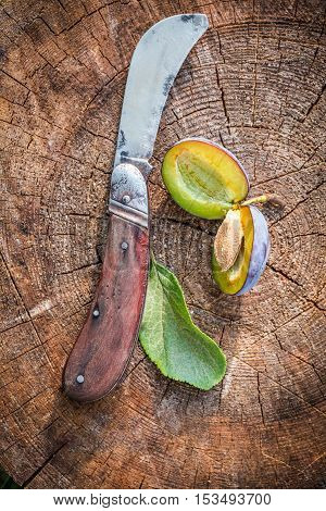 Closeup of little old penknife and fresh plums
