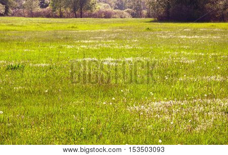 Spring meadow Hungarian countryside. Forest in the background.