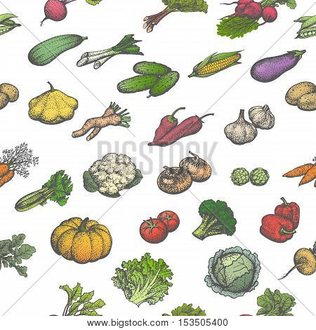 Vector illustration colored seamless pattern of a big set of juicy ripe vegetables. Isolated white background. Hand-drawn sketch veggies. Vintage retro style. Wallpaper for restaurant cafe eateries.