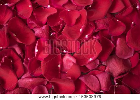 Close Up Of Red Rose Petals. Floral Background. Red Rose Stock Photography. Styled Marketing Photogr