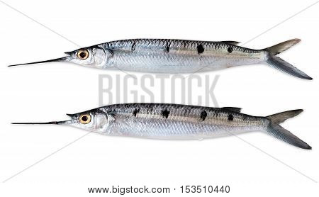 two fishes on a white background/ close up
