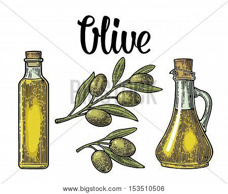 Bottle glass of Olive oil with cork stopper and branch with leaves. Hand drawn design element. Vintage color vector engraving illustration for logotype poster web. Isolated on white background.