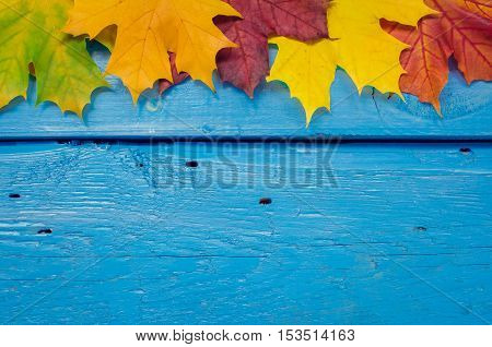 Autumn background with colorful fall maple leaves on blue rustic wooden table with place for text. Thanksgiving autumn holidays background concept. Banner with autumn leaves. Copy space. Top view.