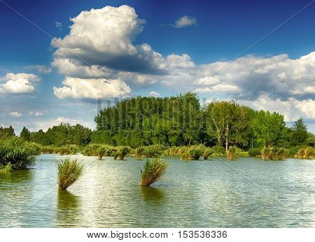 Lake Bujtosi in Nyiregyhaza, Hungary.  Deep cloudy blue sky and forest green. Reed in the water. Summer season landscape. Windy weather.