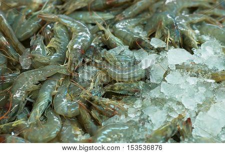 Pile of raw langoustines in fish market.