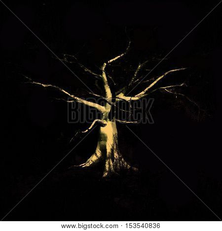 Front view shot of exotic tropical big leaveless tree isolated on black background