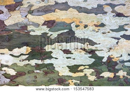 colored decorative tree bark as a background