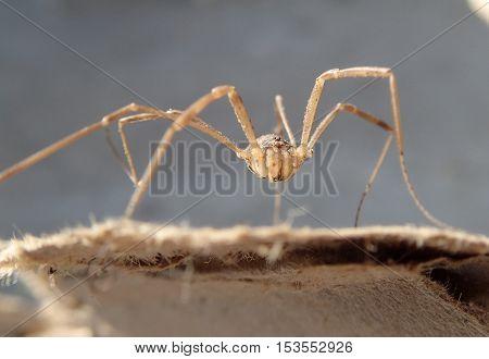 Long legs arachnid waiting on a cardboard